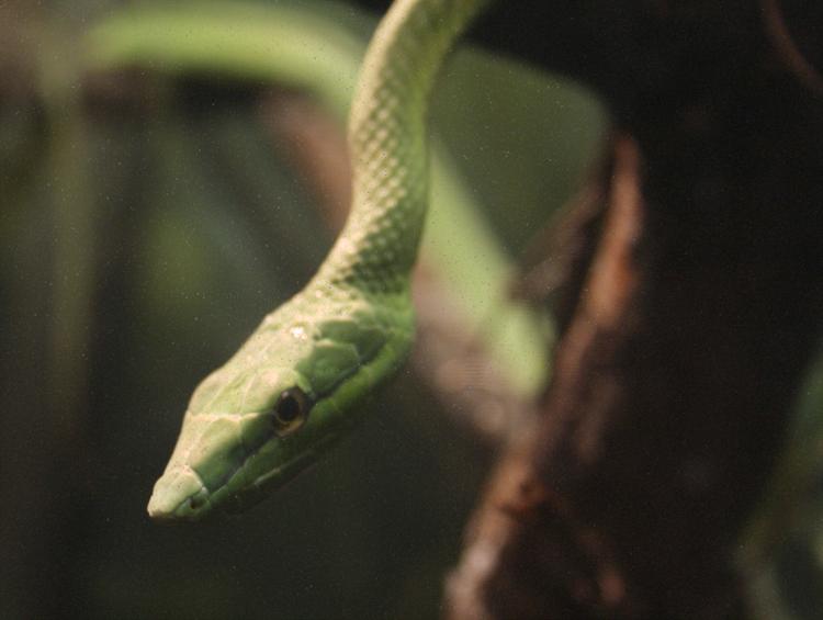 If it were a snake…